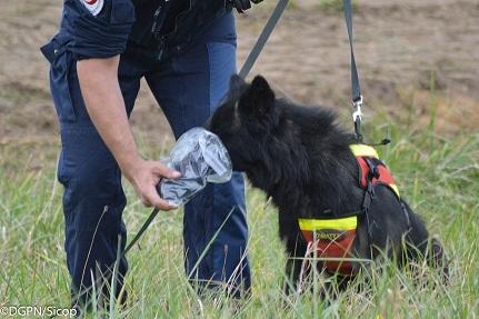 Sur la piste des « chiens de secours » / L'actu police